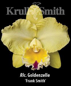 Rlc. Goldenzelle 'Frank Smith'